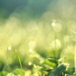 Gartengestaltung - Tipps für einen perfekten Rasen